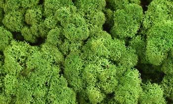 Ez a szín az erdők természetes zöld színét idézi.